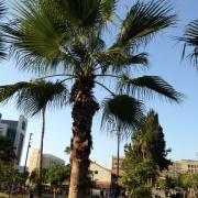 Не могла поверить, что пальмы и трава - на песке, посажены руками человеческими